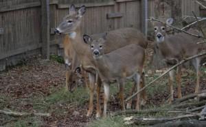 deer cwd story 12-23-14