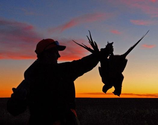 pheasant pic
